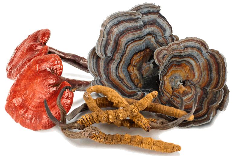 Benifits of medi mushrooms