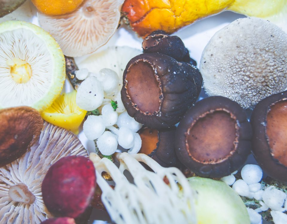 Medicinal Mushrooms May Ease Chemotherapy Side Effects